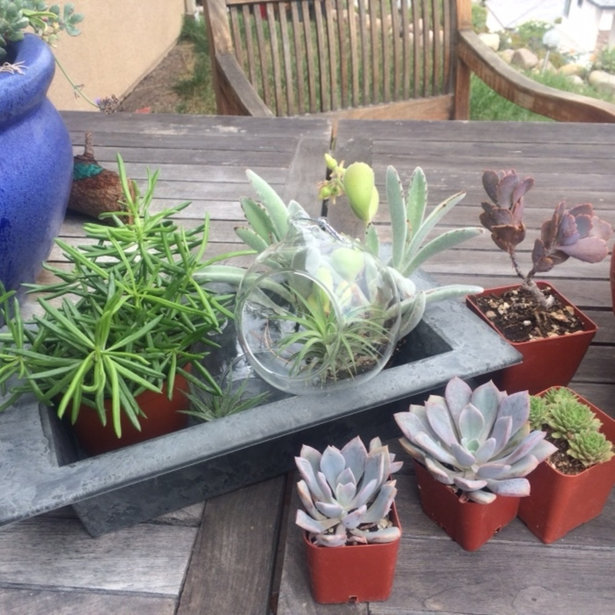 Any assortment of succulents. You can buy them from nurseries, farmers markets or steal a couple from your friend's backyard.