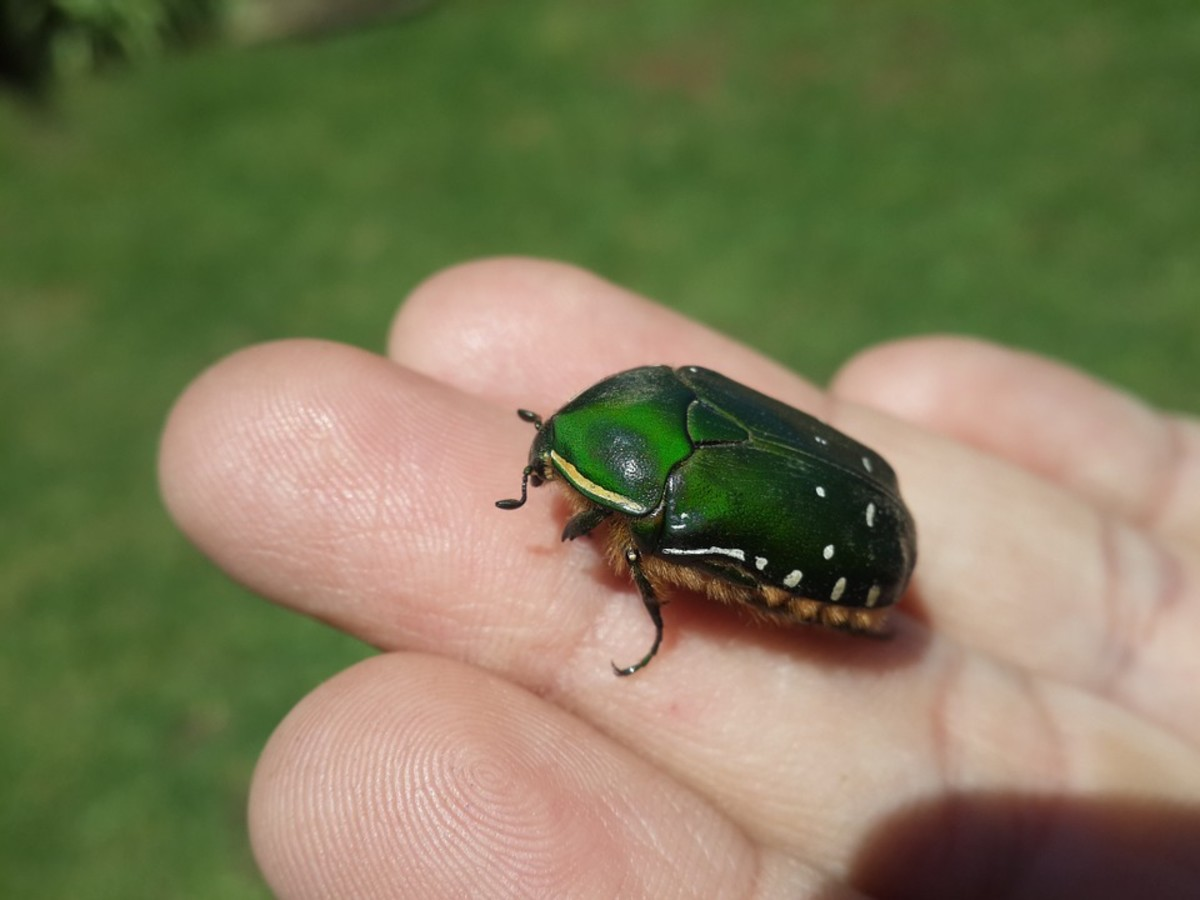 A June bug is a lady bug that drives a tank.