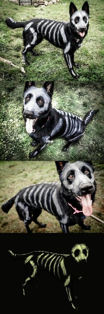 10 diy halloween dog costumes that wont drive them crazy holidappy skeleton dog solutioingenieria Choice Image