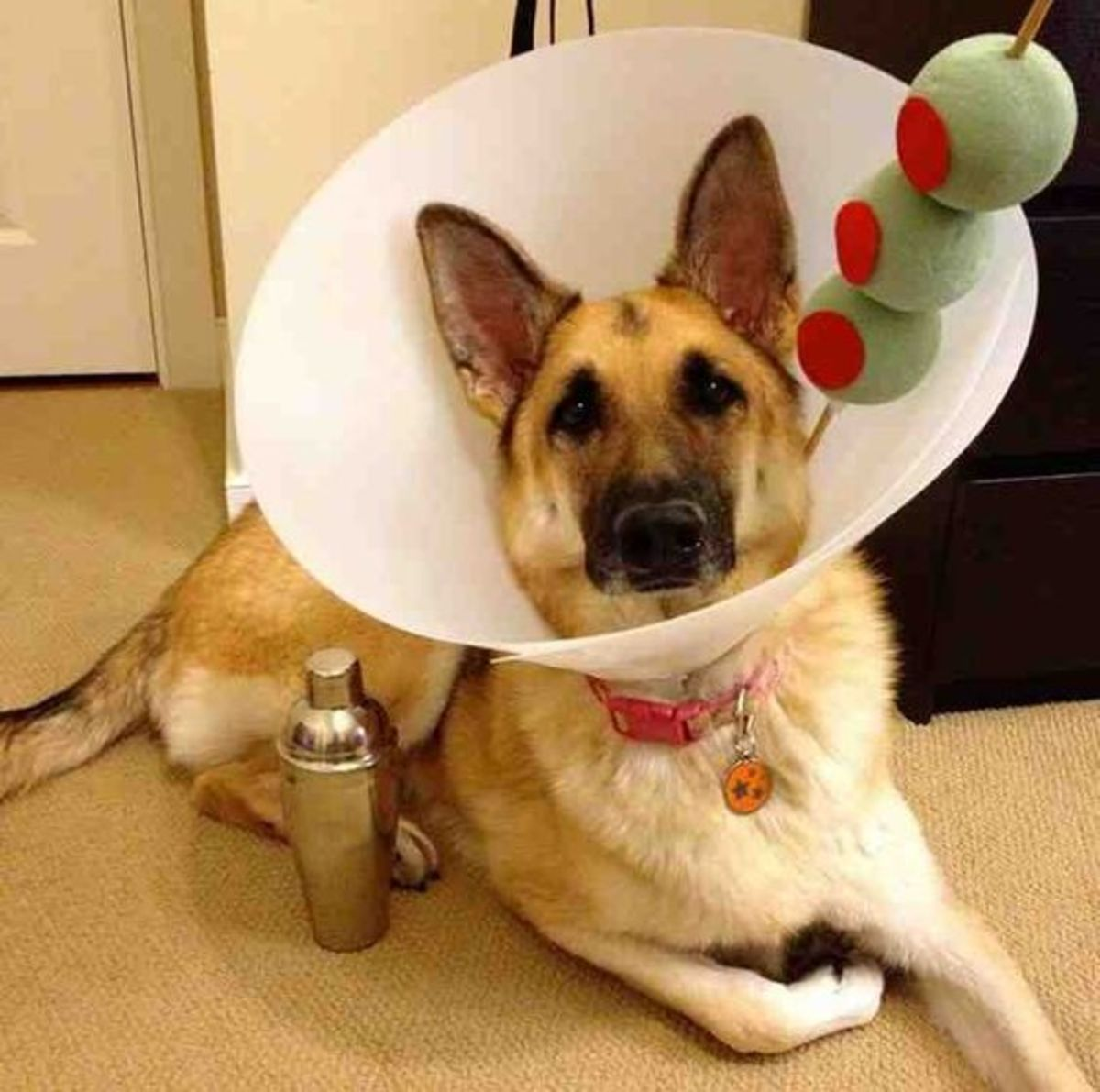 10 Diy Dog Costumes That Won