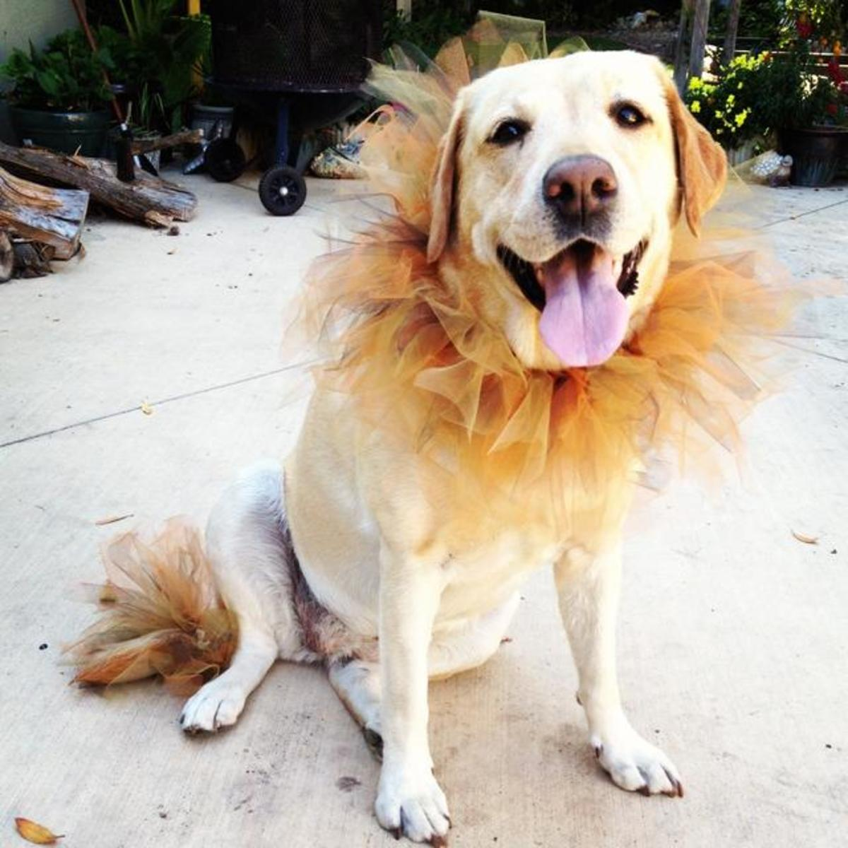 13-halloween-costume-ideas-for-your-dog-that-wont-drive-them-crazy