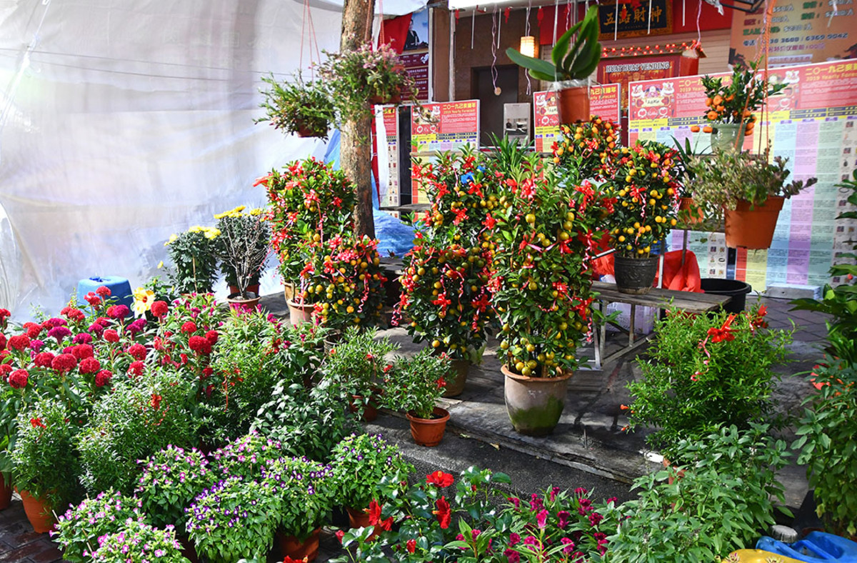 "Other than traditional Chinese New Year plants such as Cockscombs and ""Phoenix Tails,"" all sorts of other plants are also sold at the festive bazaars too"