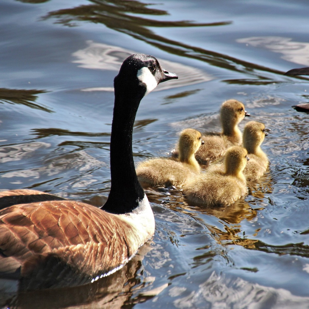 This is a Mother Goose, which is a listed holiday for this month...