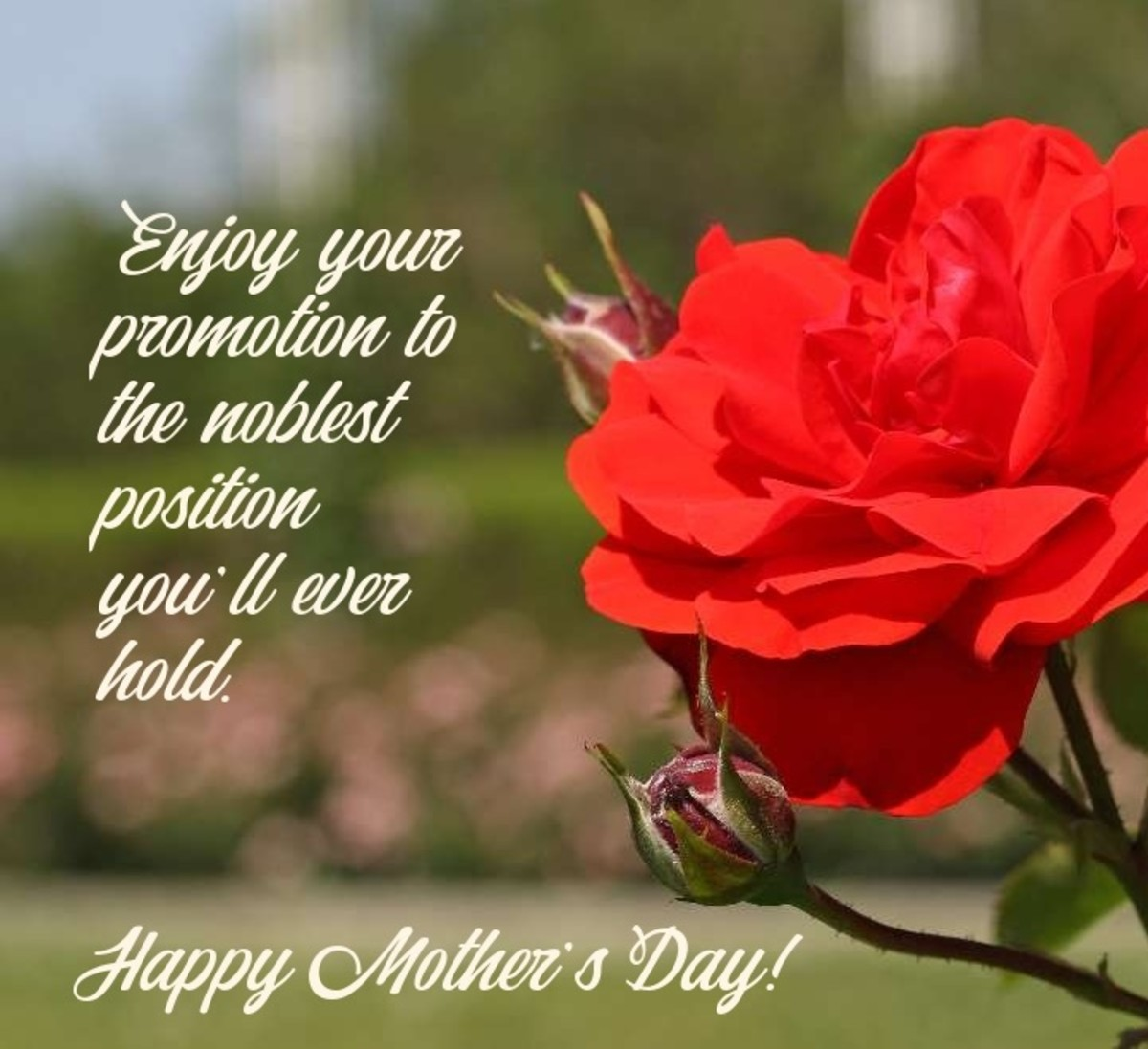 On your first Mother's Day, enjoy your promotion to the noblest position you'll ever hold.
