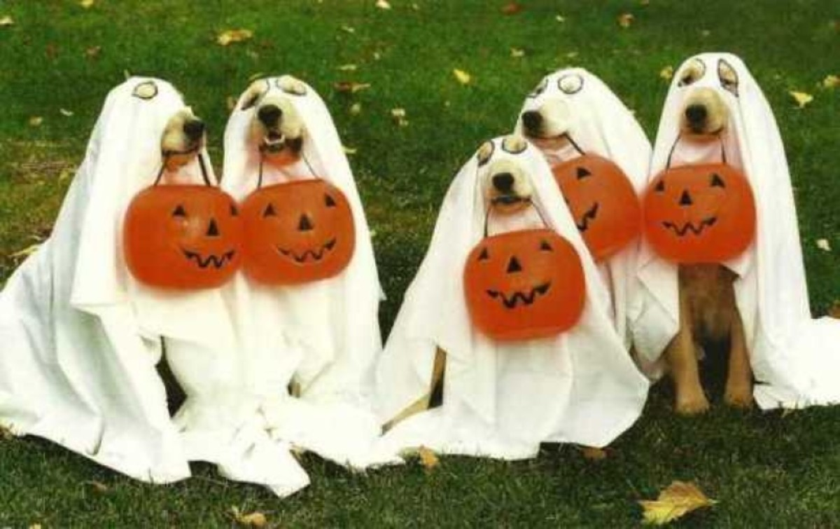 Dog ghosts! Dogs make great trick-or-treaters./