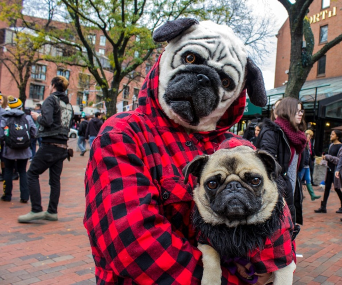 Halloween pet parades have become very popular around the nation