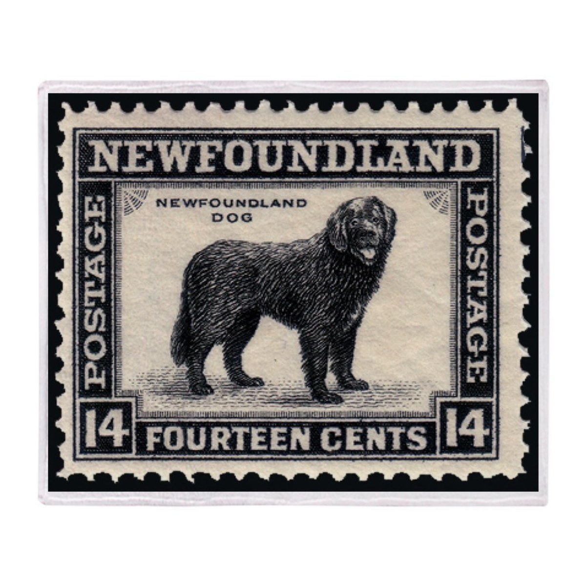 Beautiful Newfoundland Lap Blanket