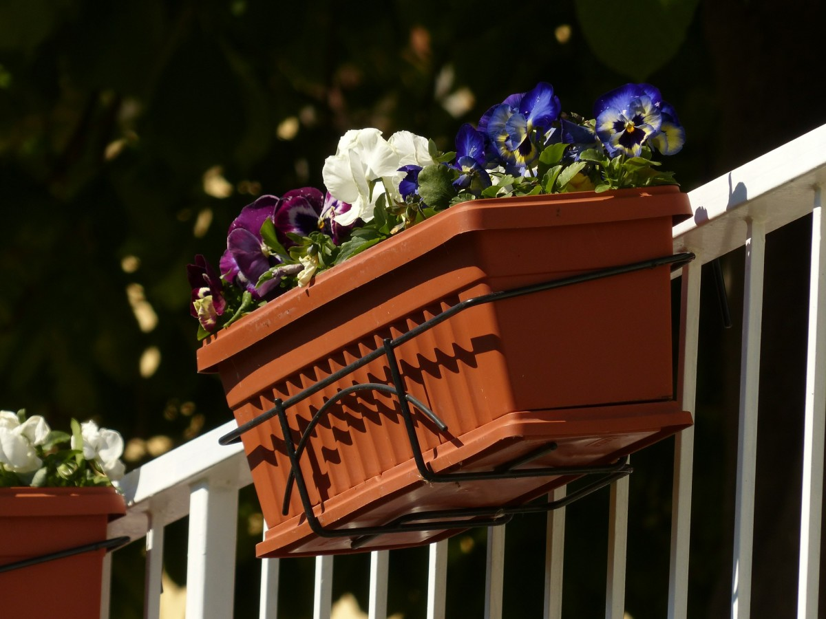 A planter full of edible pansies is a practical and beautiful gift for anyone who loves to cook and throw stylish dinner parties.