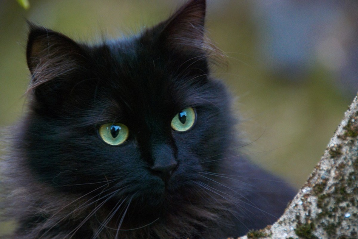 Black cats are just as cute as other color cats.
