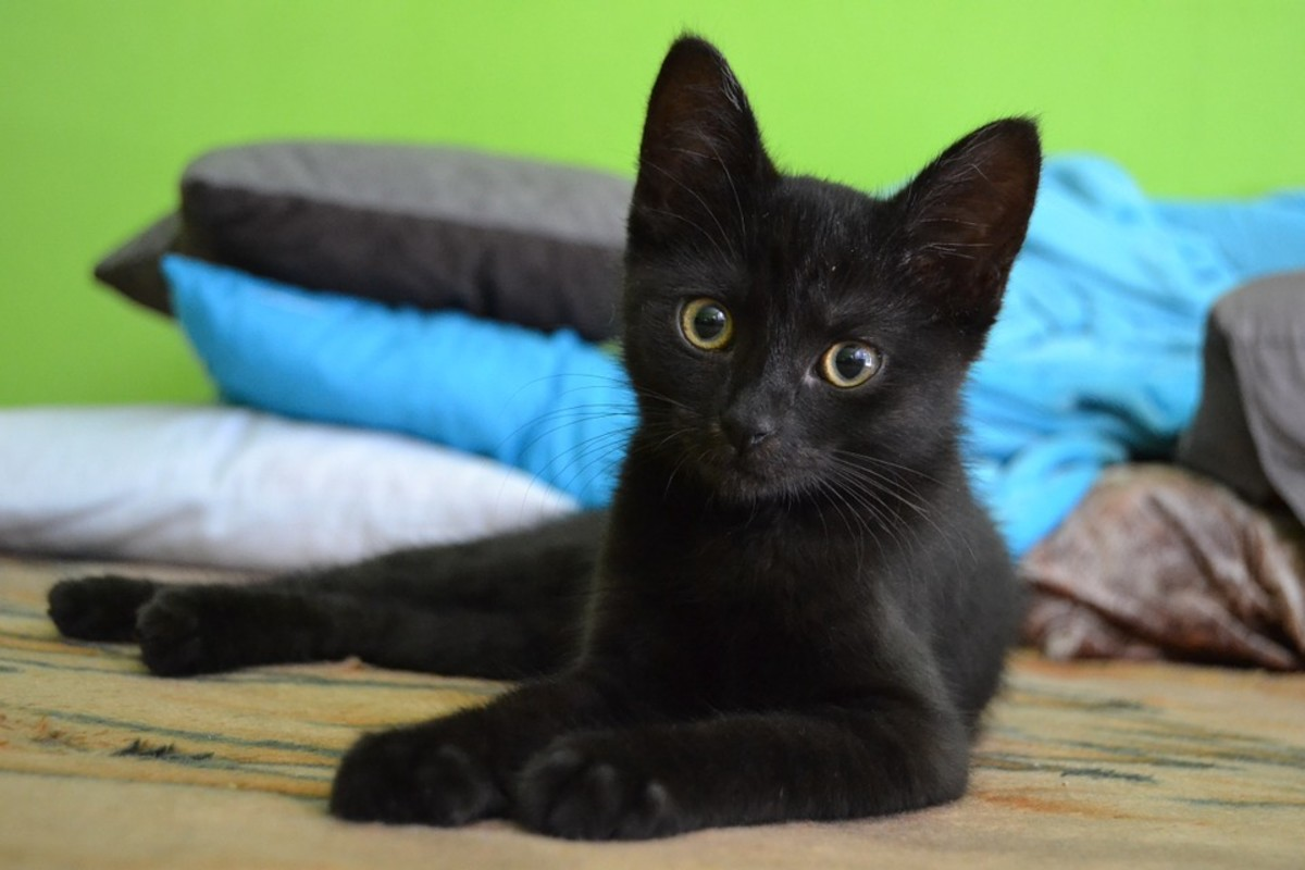 Black cats are as adorable as they are mysterious.