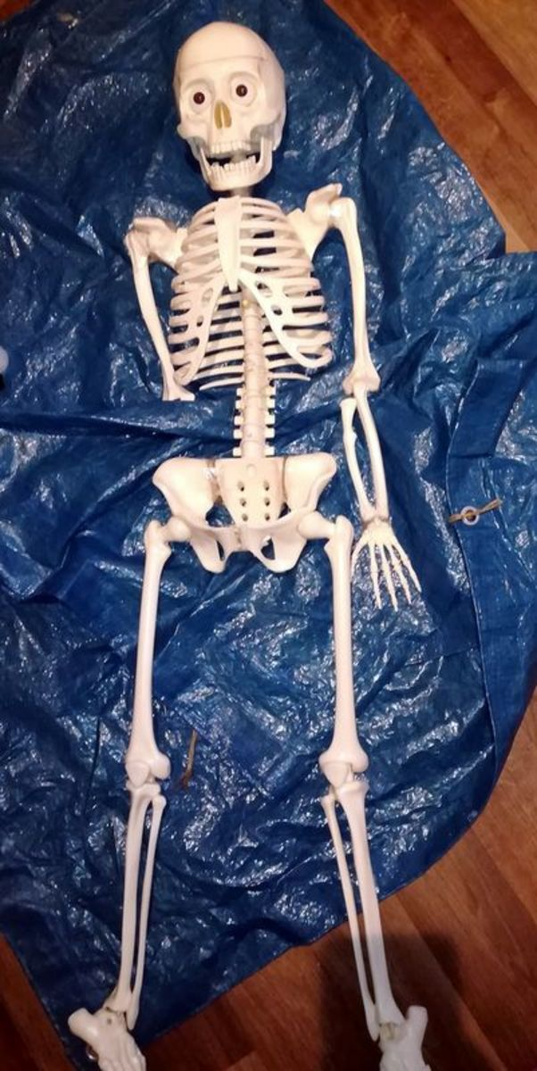 """This is the child's skeleton I used for my Georgie Halloween decoration based on the movie """"IT."""""""