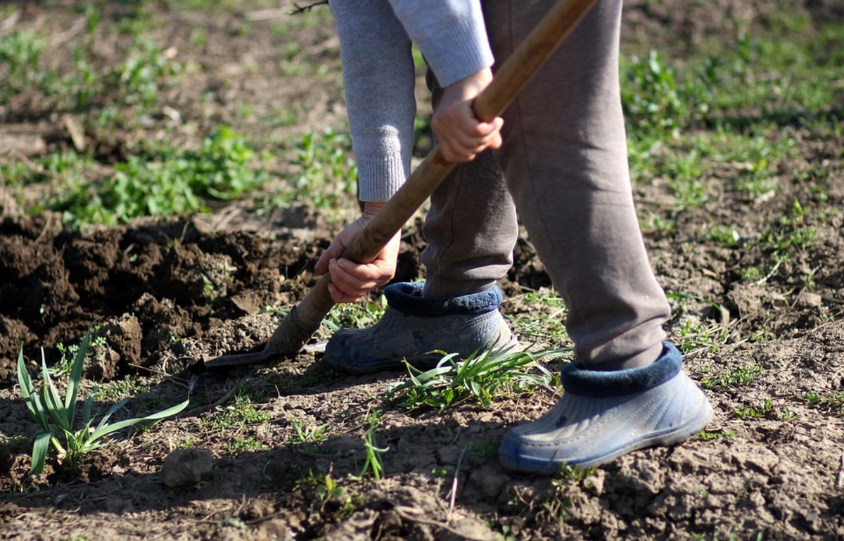 It's a good idea to dig a planting hole before the ground freezes.