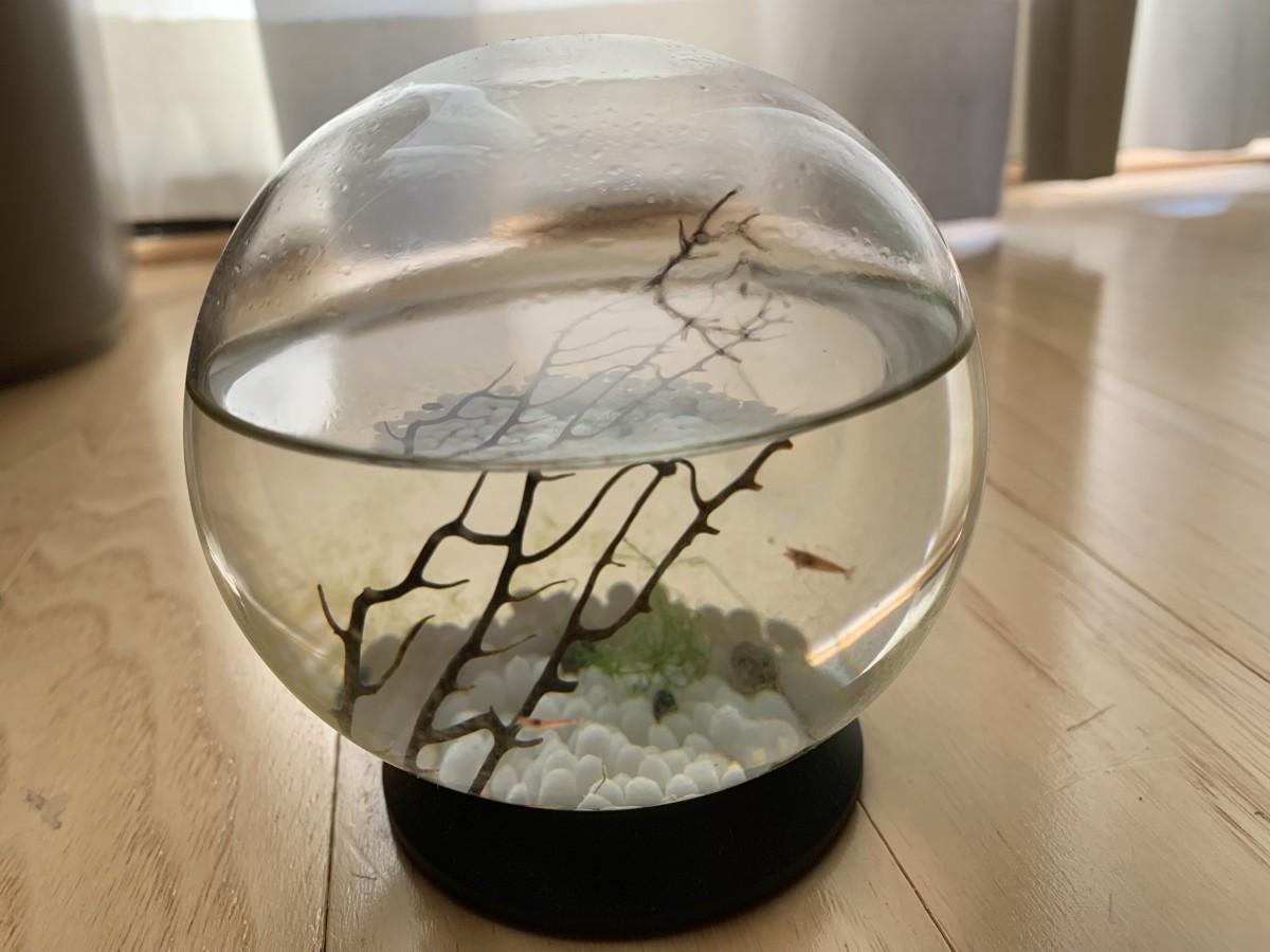 I love my ecosphere!