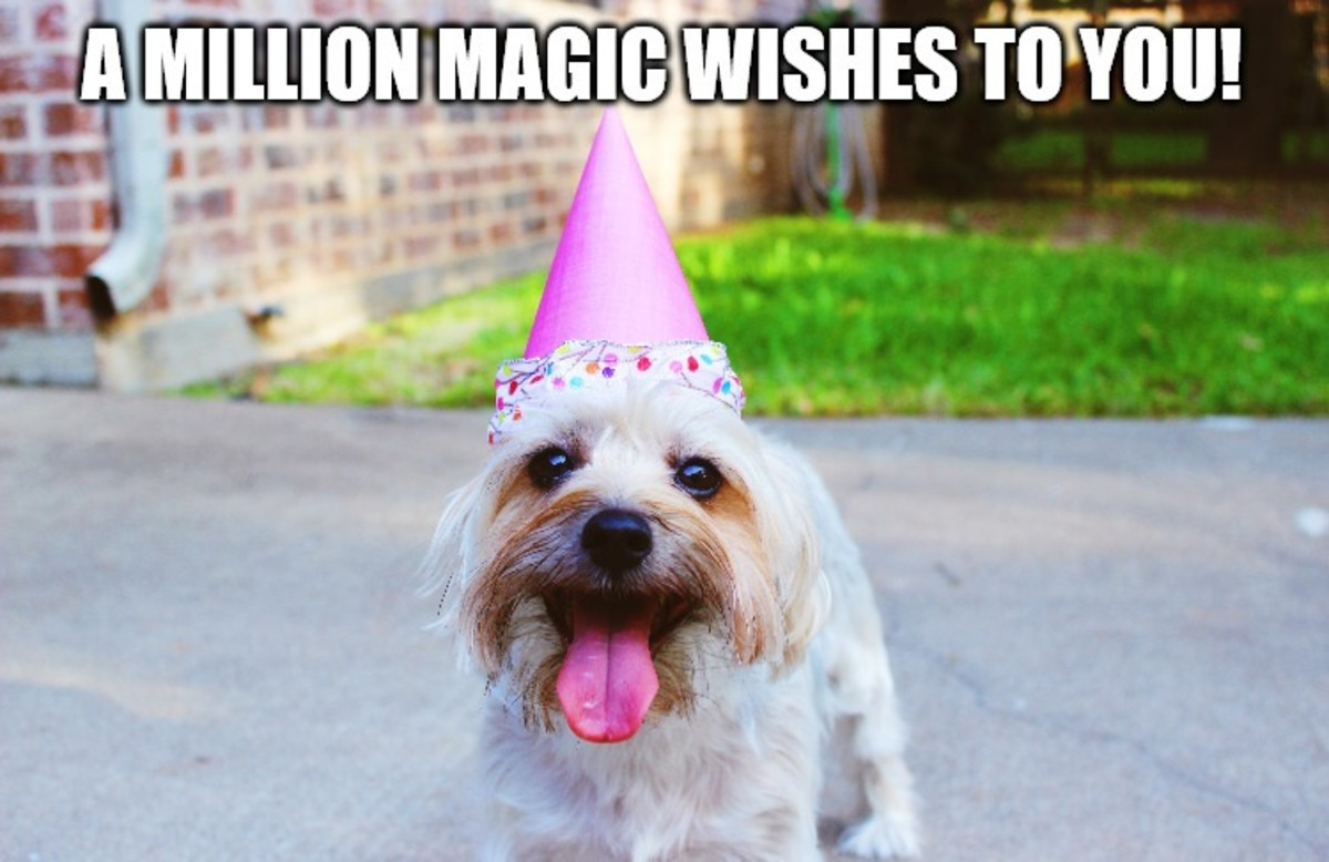 A million magic wishes to you!
