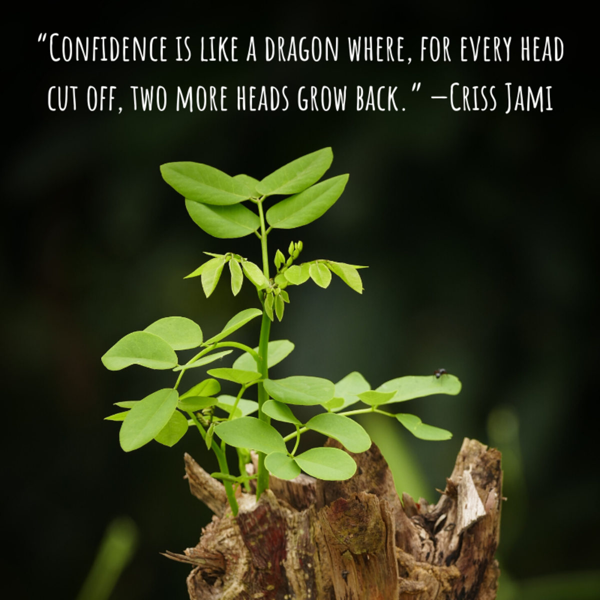 """Confidence is like a dragon where, for every head cut off, two more heads grow back."" —Criss Jami"