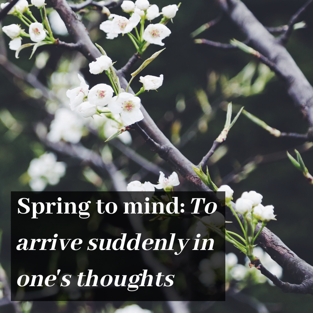 Spring to mind: To arrive suddenly in one's thoughts