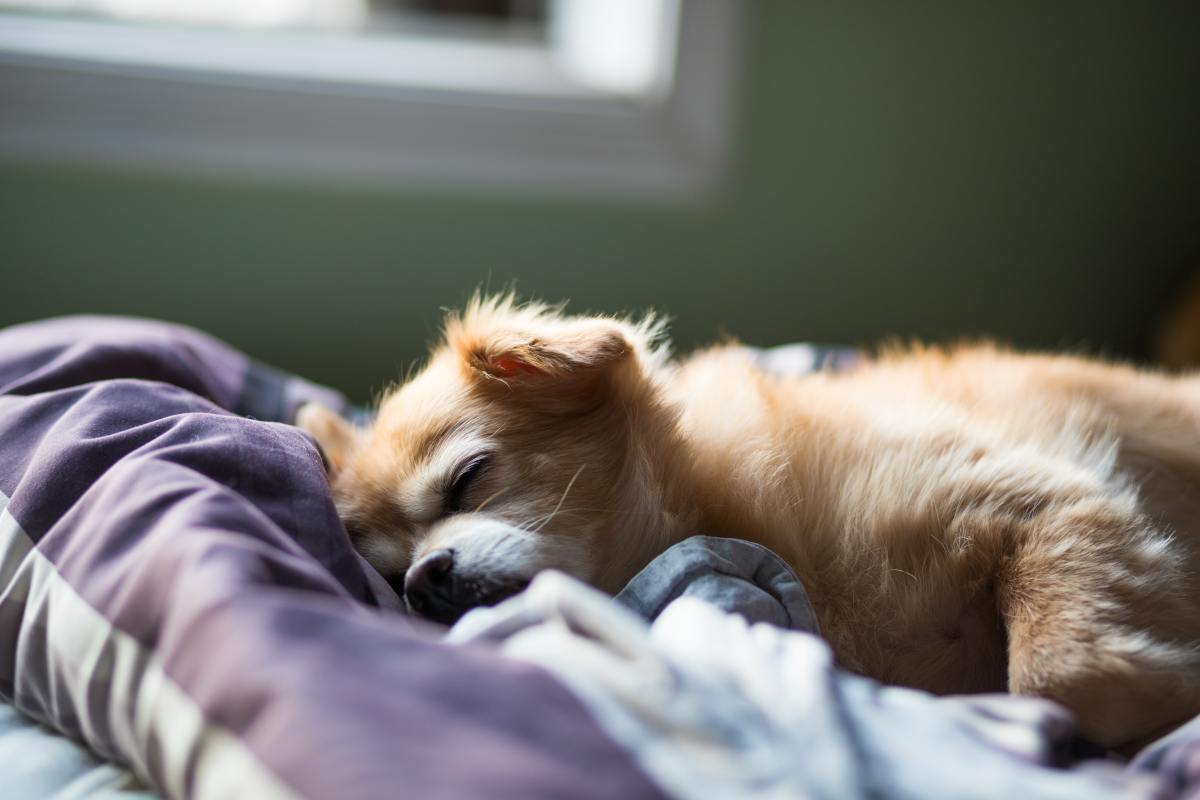 Calming aids can destress and relax your pup.