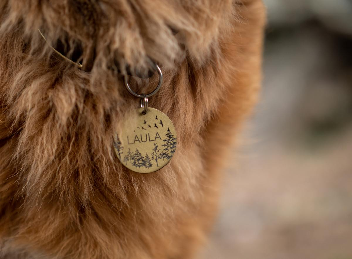 Make sure your pet has an ID tag on his collar with your updated contact information.