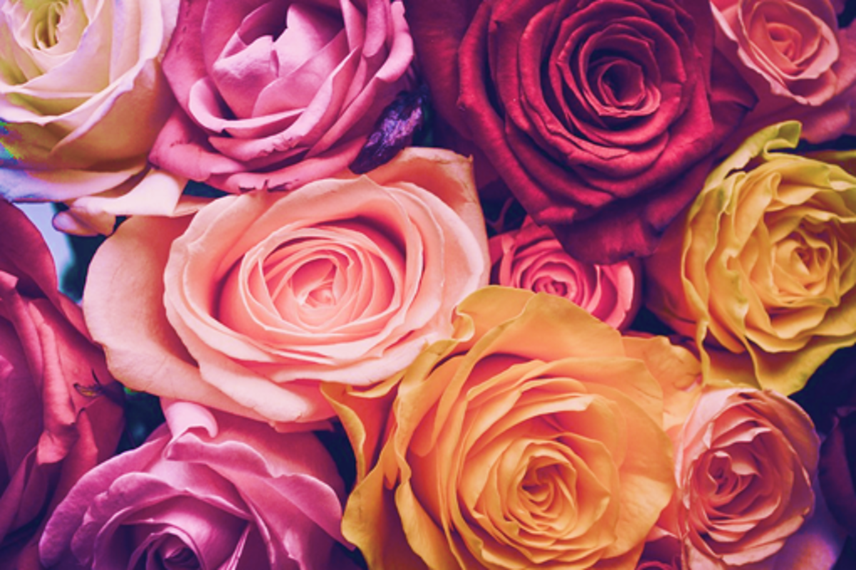 No matter how many roses you give, they are sure to be appreciated.