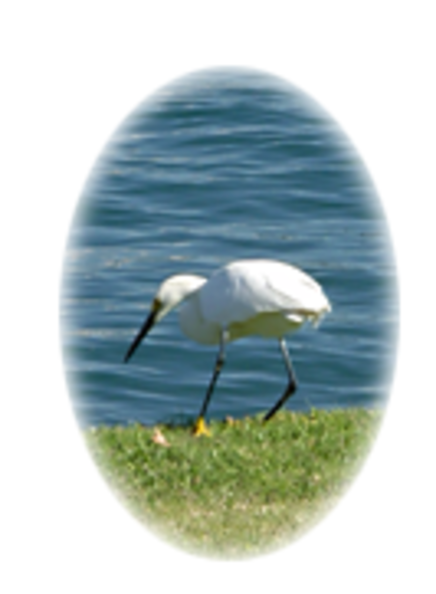Photoshop Masking: Oval Photo Frame Tutorial