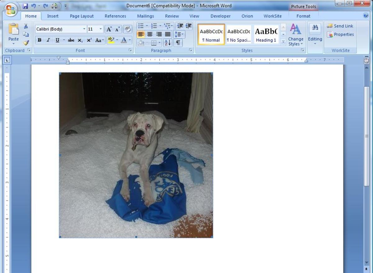 Inserting the picture into Microsoft Word