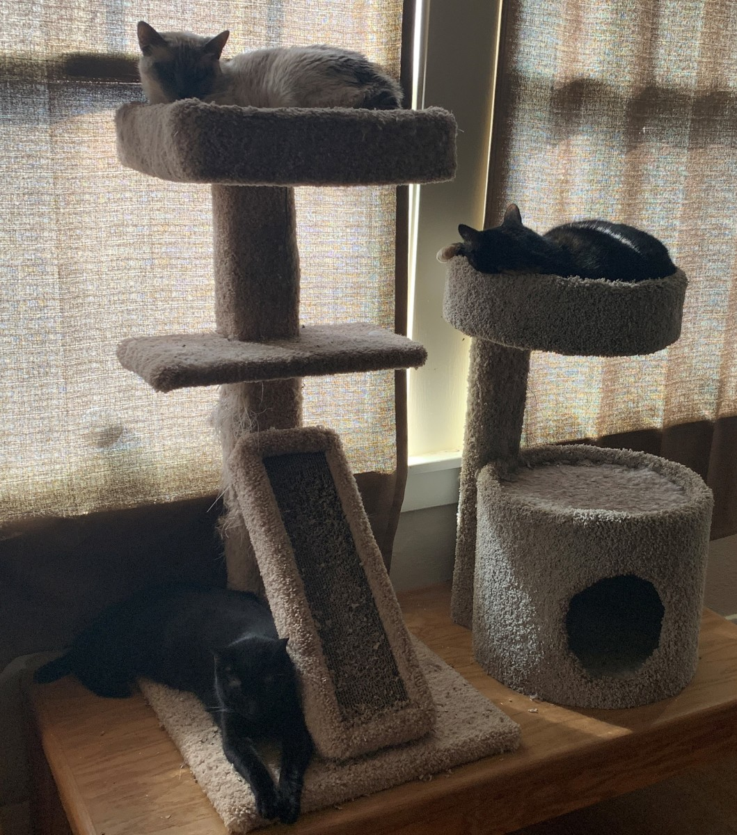 A combination of cat towers can give multiple cats a place to lay.
