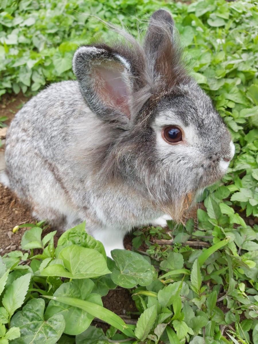Our pet bunny rabbit Skipper