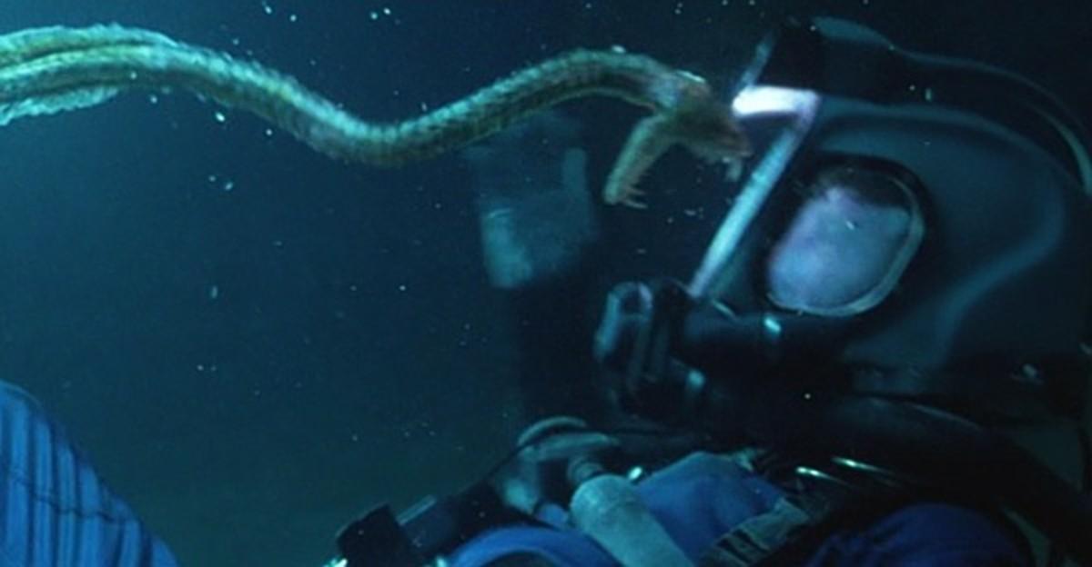 Sea snake wants to say hello !