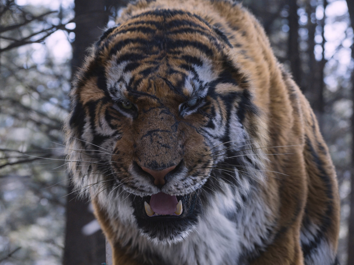 """The Mountain Lord from Park Hoon-jung's """"The Tiger."""""""