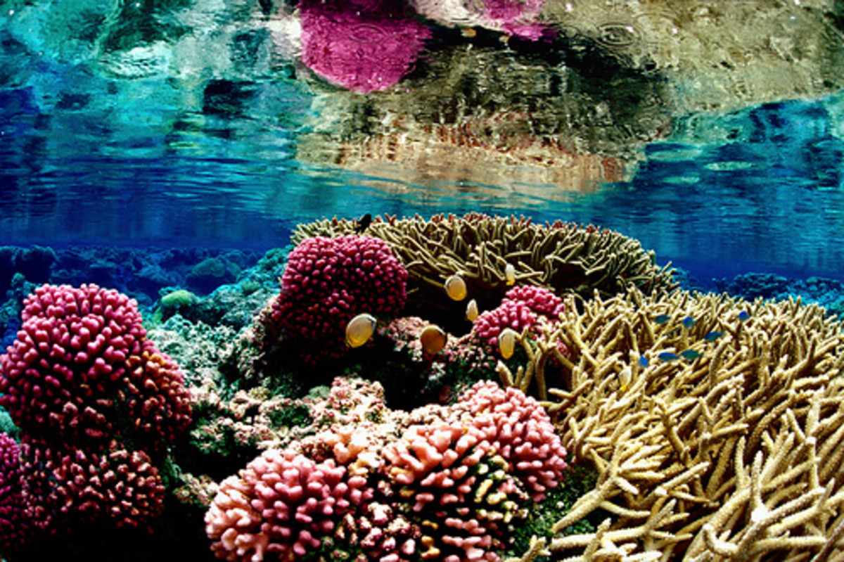 Coral reef in the wild