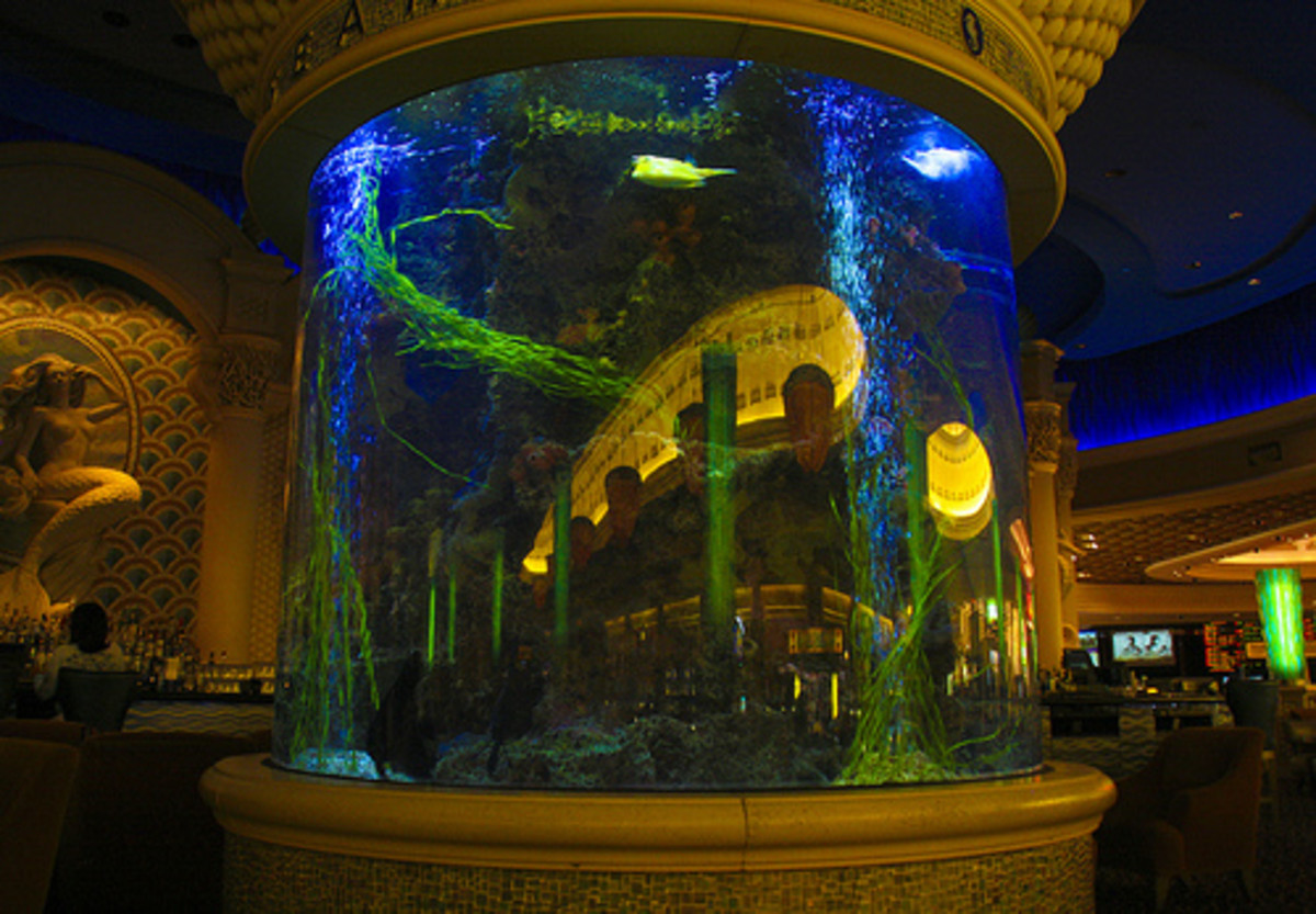 Animal planet s tanked controversy reelrundown for Fish tank las vegas