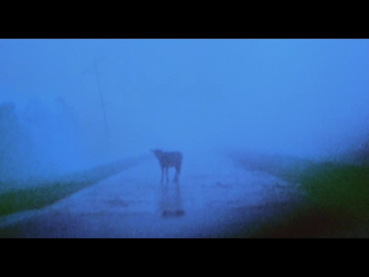 The montage also features a shot of a vehicle approaching a calf standing in the middle of the road.