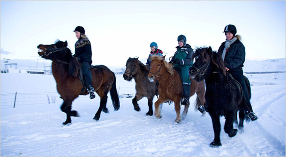 Icelanders and their horses out for a winter ride