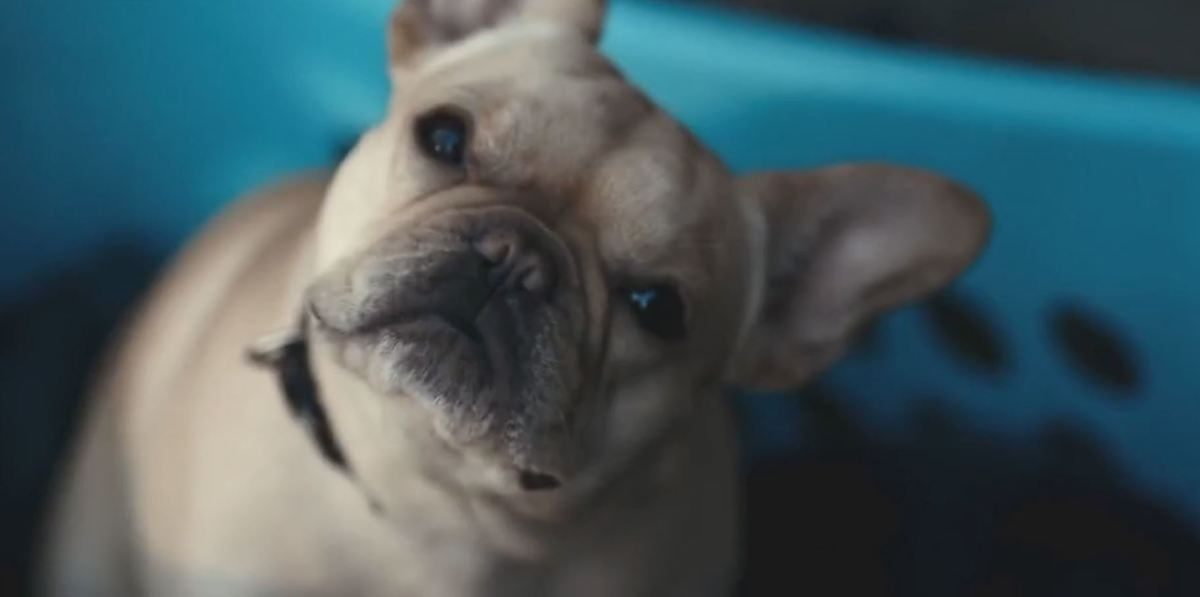 The dog in 'John Wick' lasted longer than him... honestly, the fact that the dog is shot for no reason kind of irritates me the more I think about it.