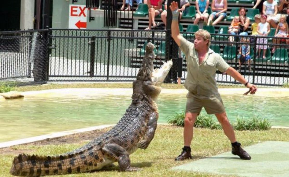 Steve Irwin feeding crocodile at reptile park