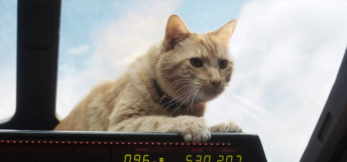 "Goose making house cats a force to be reckoned with in, ""Captain Marvel."""