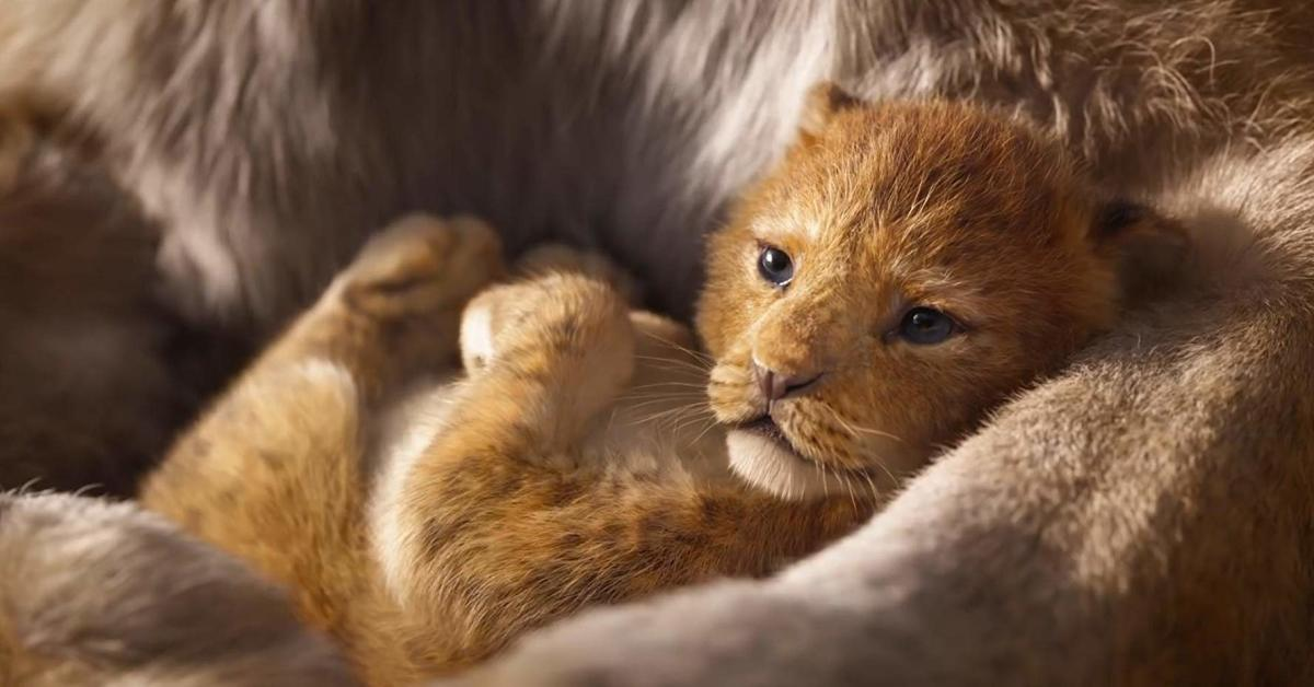 Tiny, adorable lion cub... in 3D!