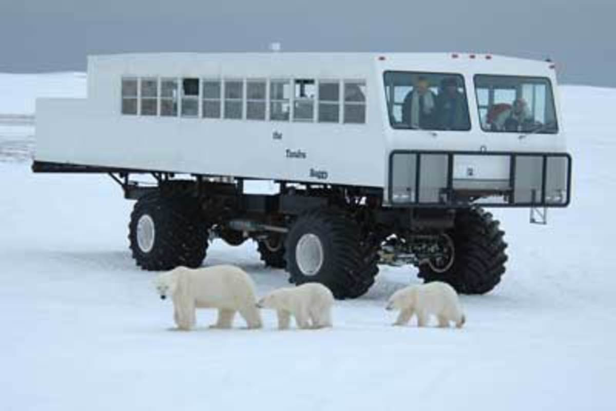 Polar Bear Tours, Churchill, Manitoba