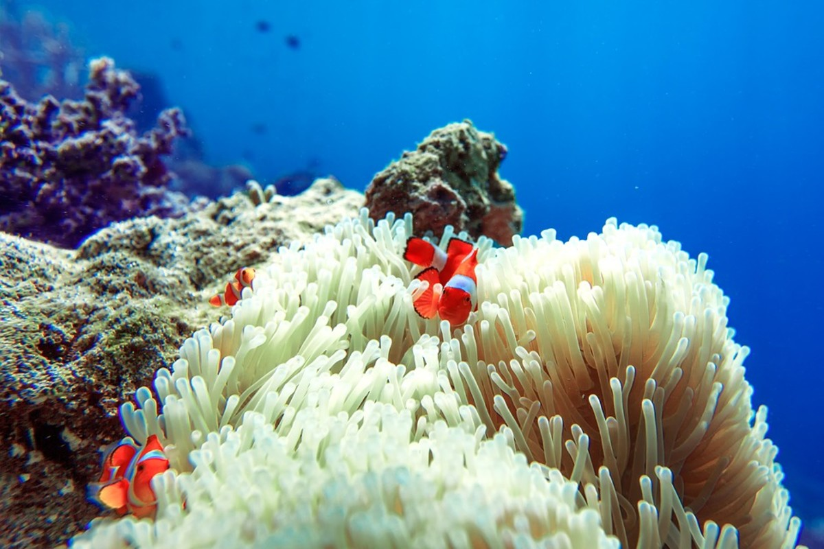 Finding Nemo on the Great Barrier Reef