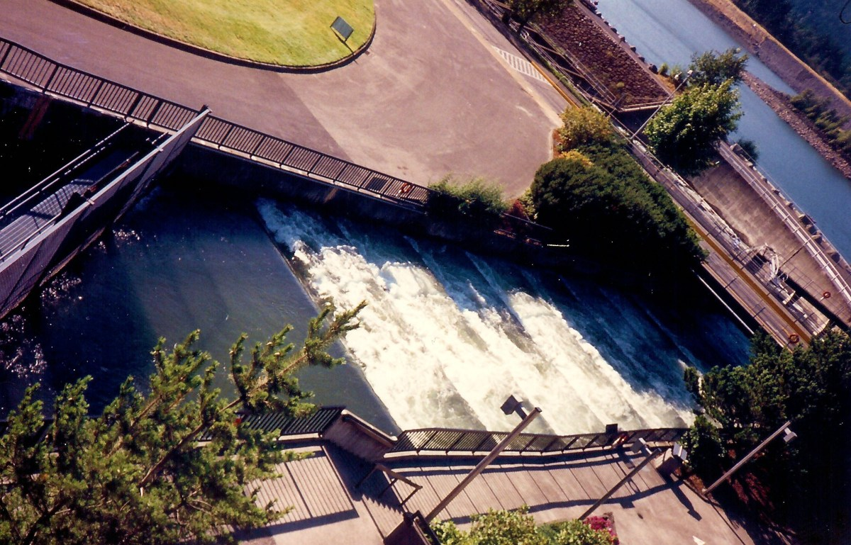 Fish Ladder at the Bonneville Lock and Dam