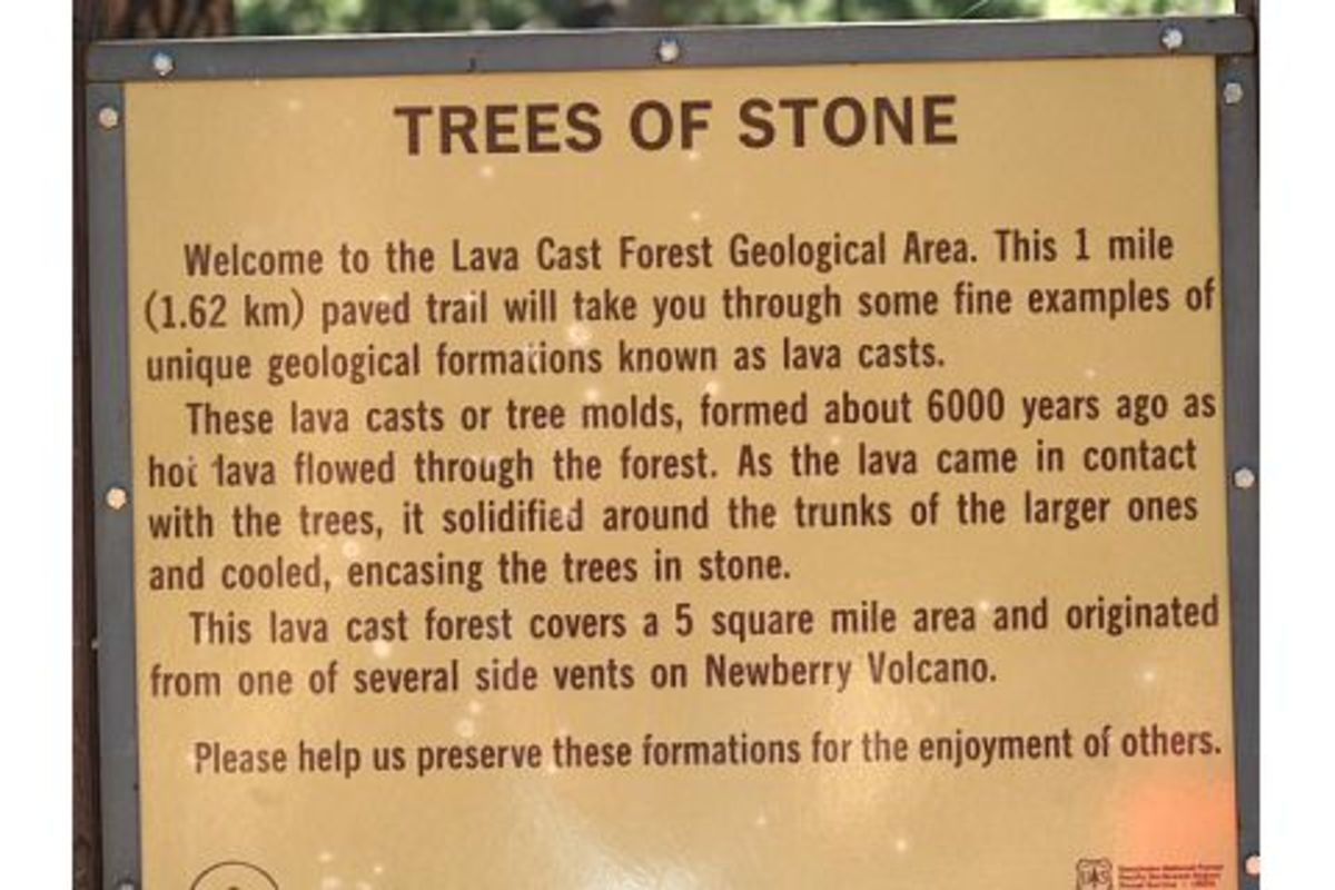 The explanatory sign at the entrance to the Lava Cast Forest park