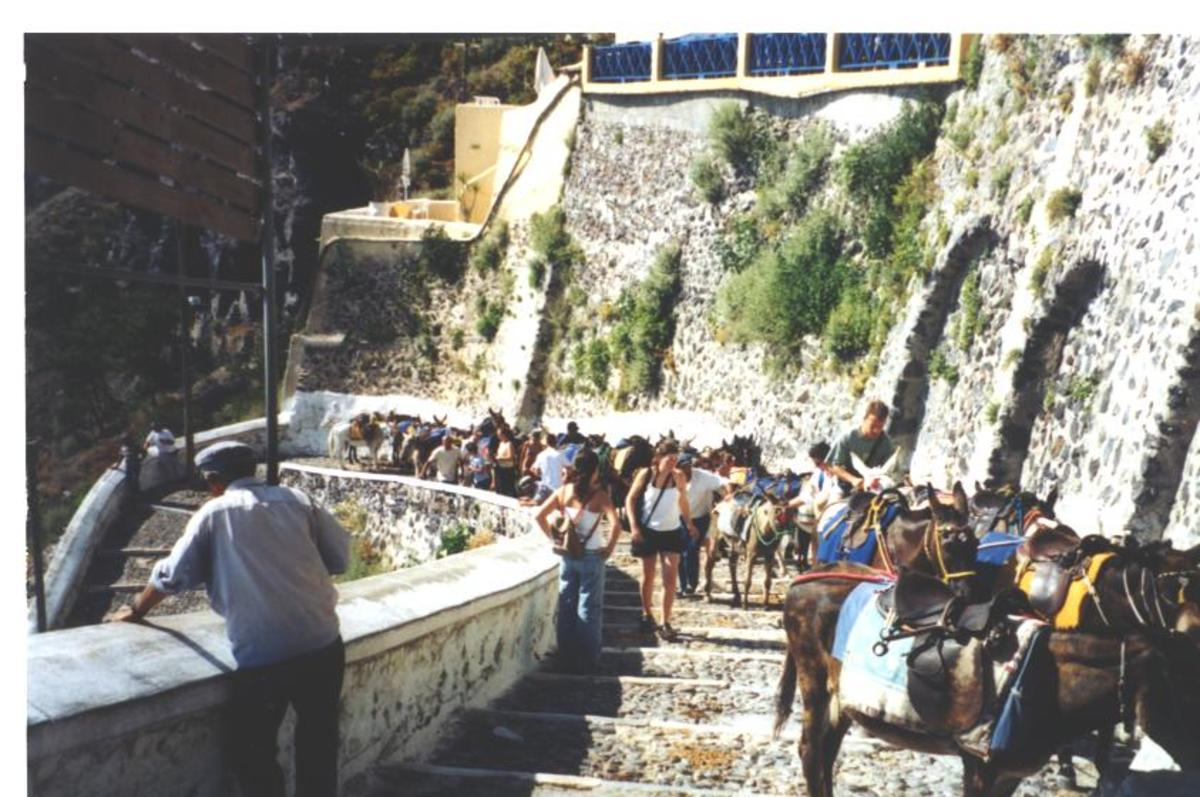 The most popular way to reach Santorini-by donkey