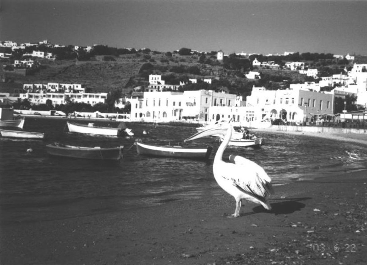 Petros the Second, the official mascot of Mykonos in 2003
