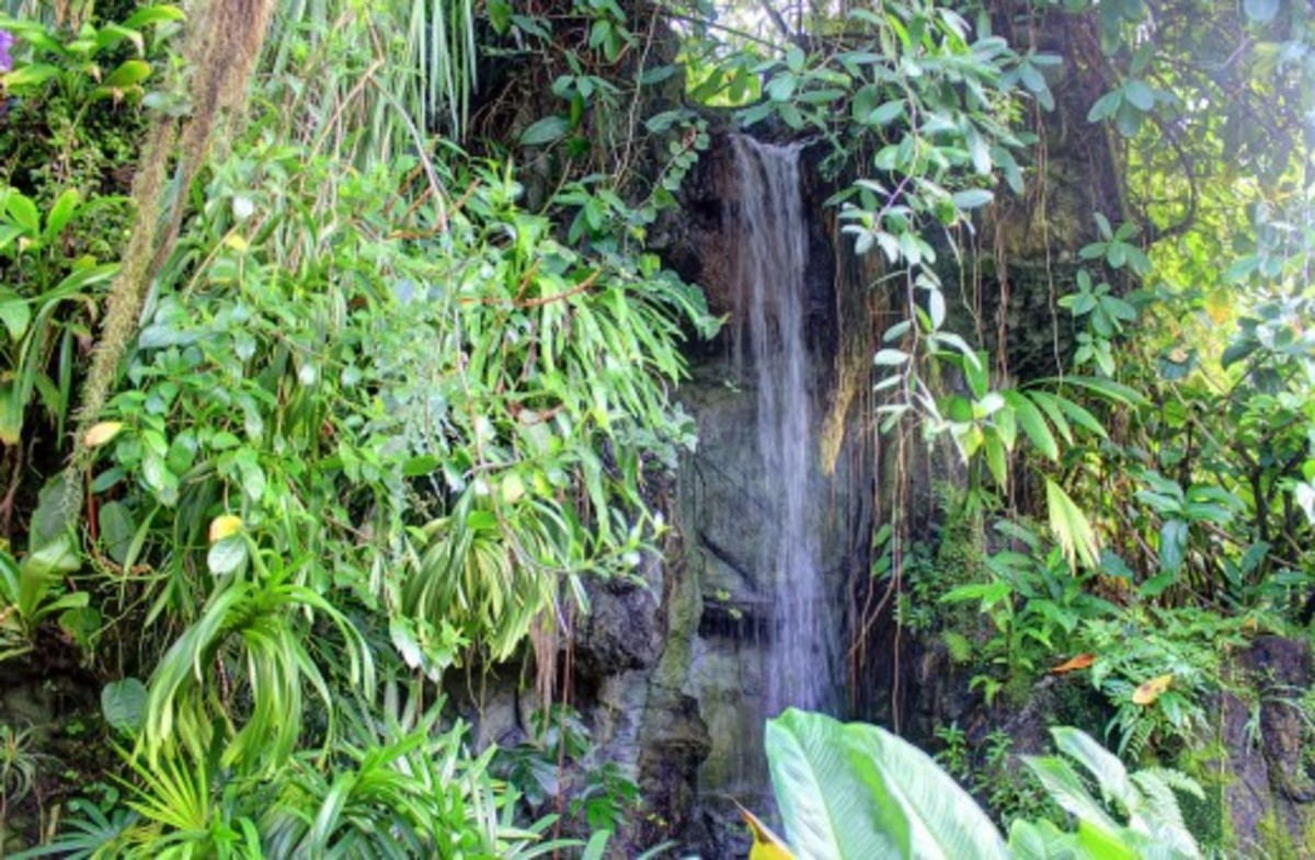 A waterfall in the Climatron of the St. Louis Botanical Gardens