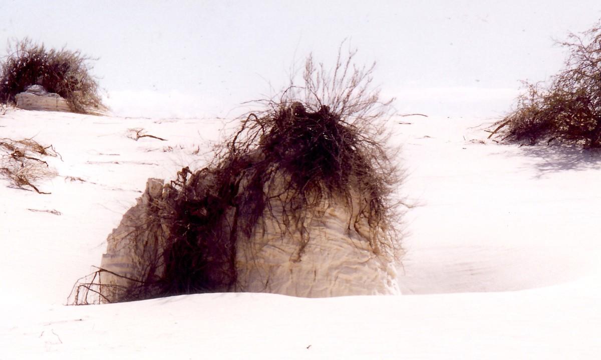 Skunkbush sumac