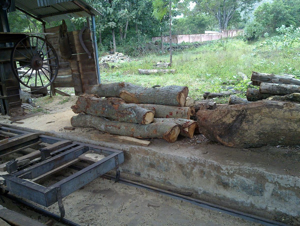 Wood logs at a sawmill
