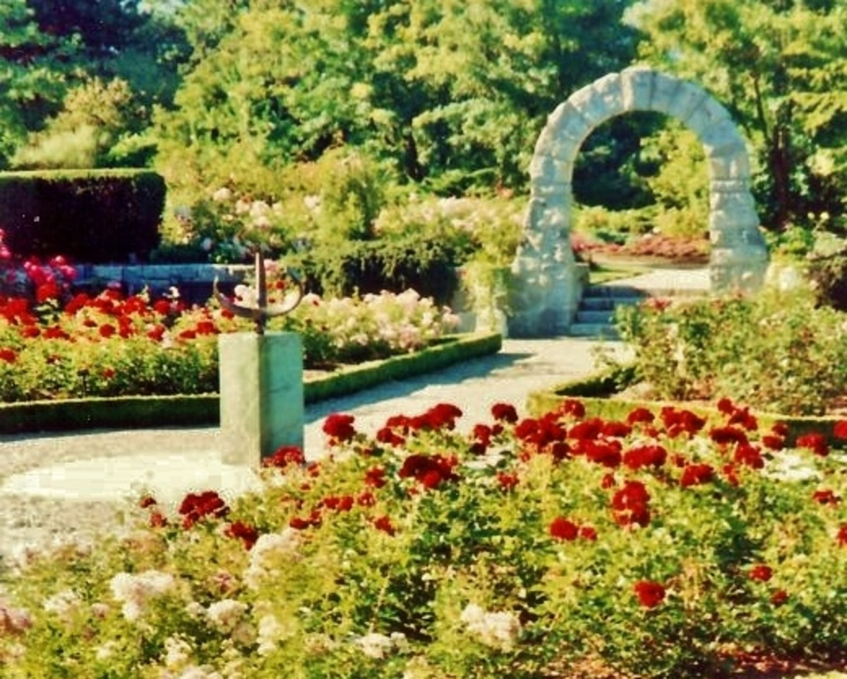 Rose Garden at Van Dusen Botanical Garden