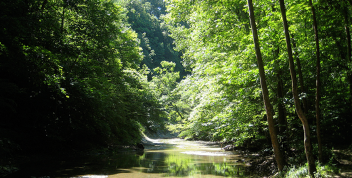 Clifty Creek in Shades State Park
