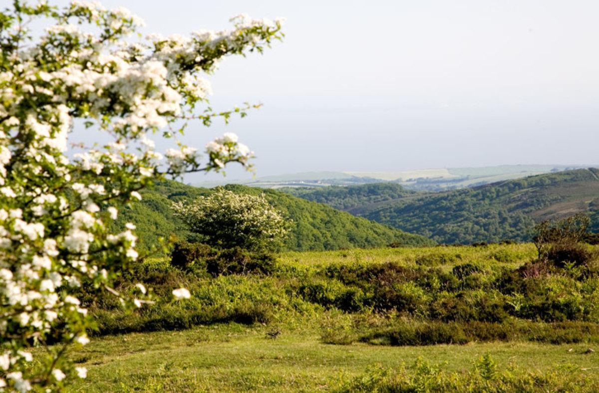 Quantocks scenery
