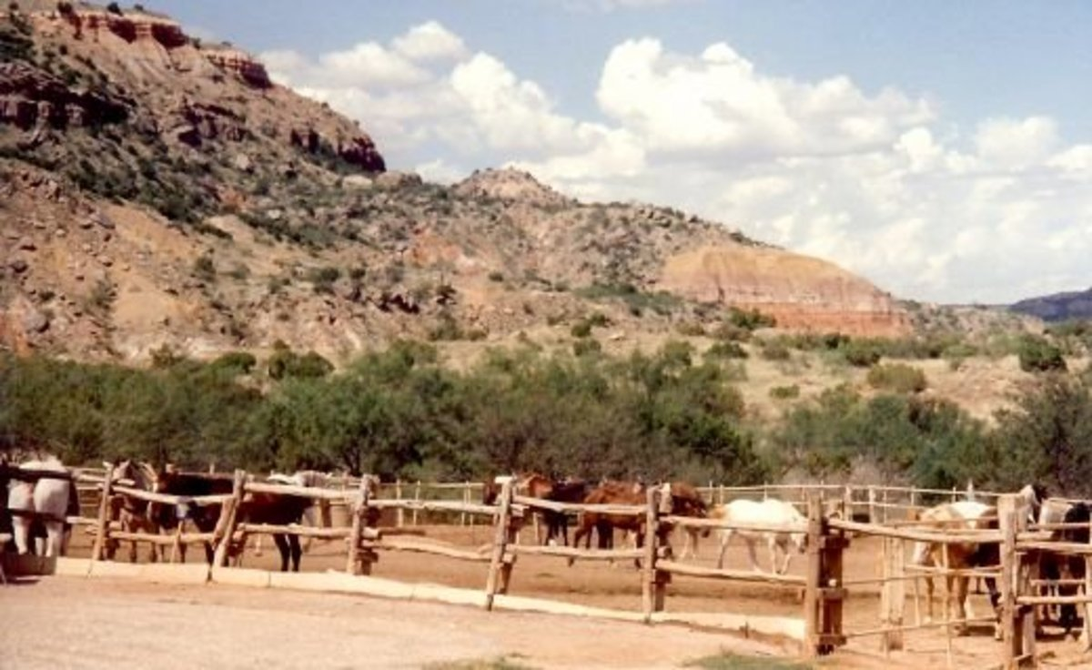 Horses can be rented to ride within Palo Duro Canyon.